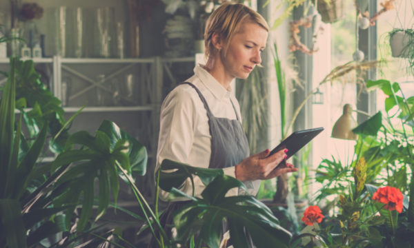 Digital Boost: How can NZ SMEs take advantage